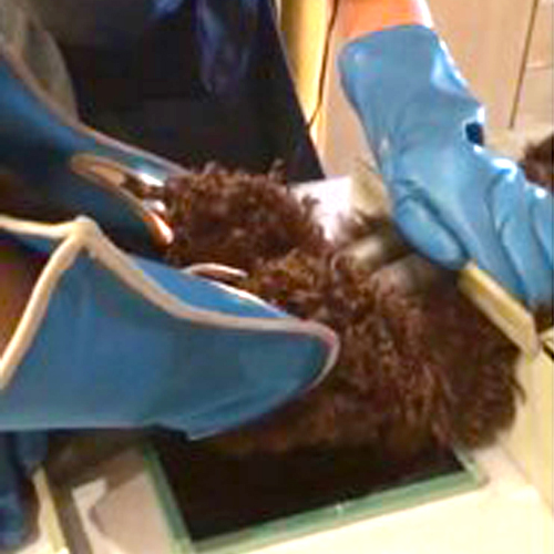 Rosin Tiergesundheit - PennHIP - Kniegelenk 90° Winkel aufeinander zubewegt